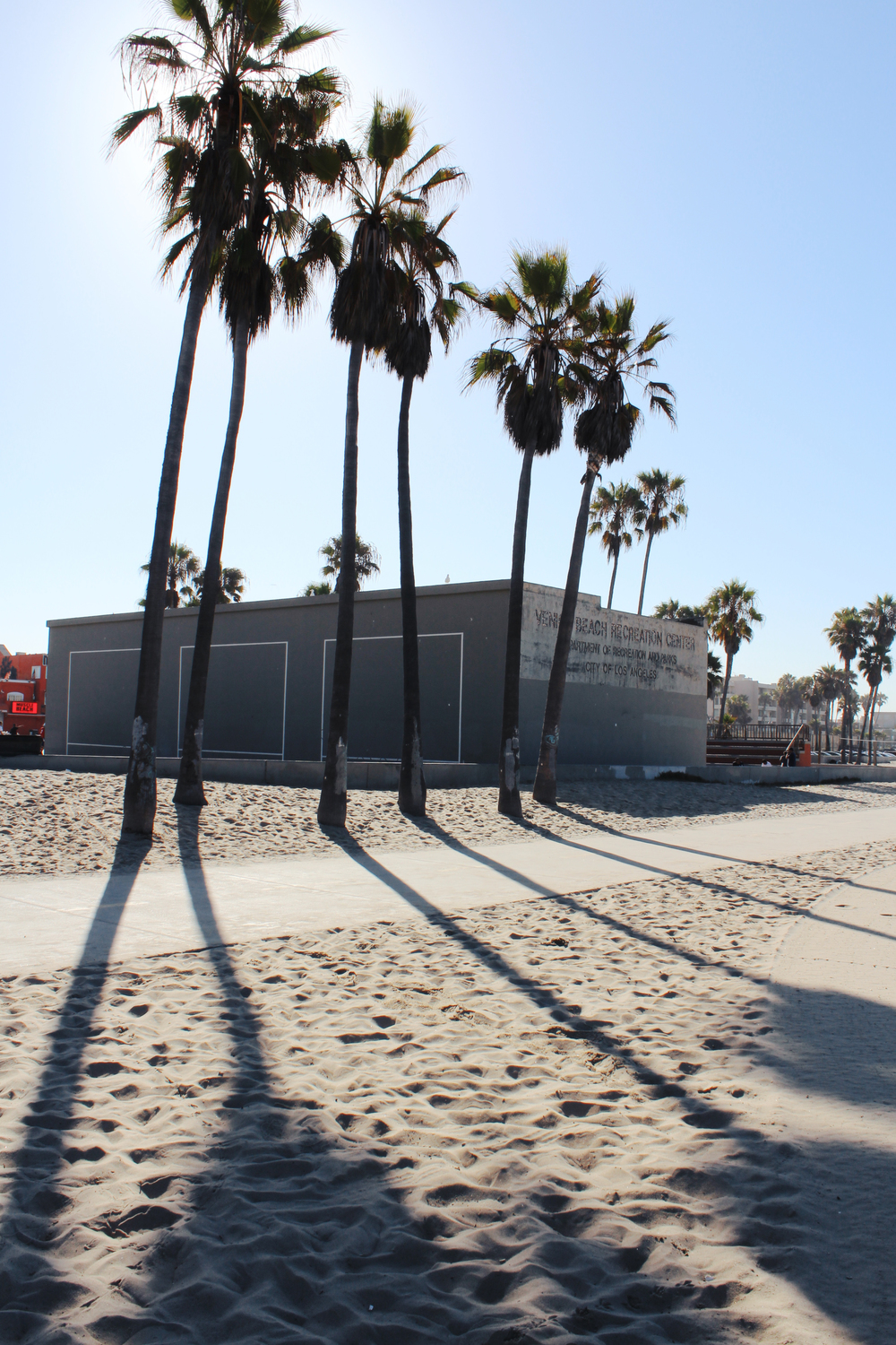 venice beach wave provocateur palm trees shadows