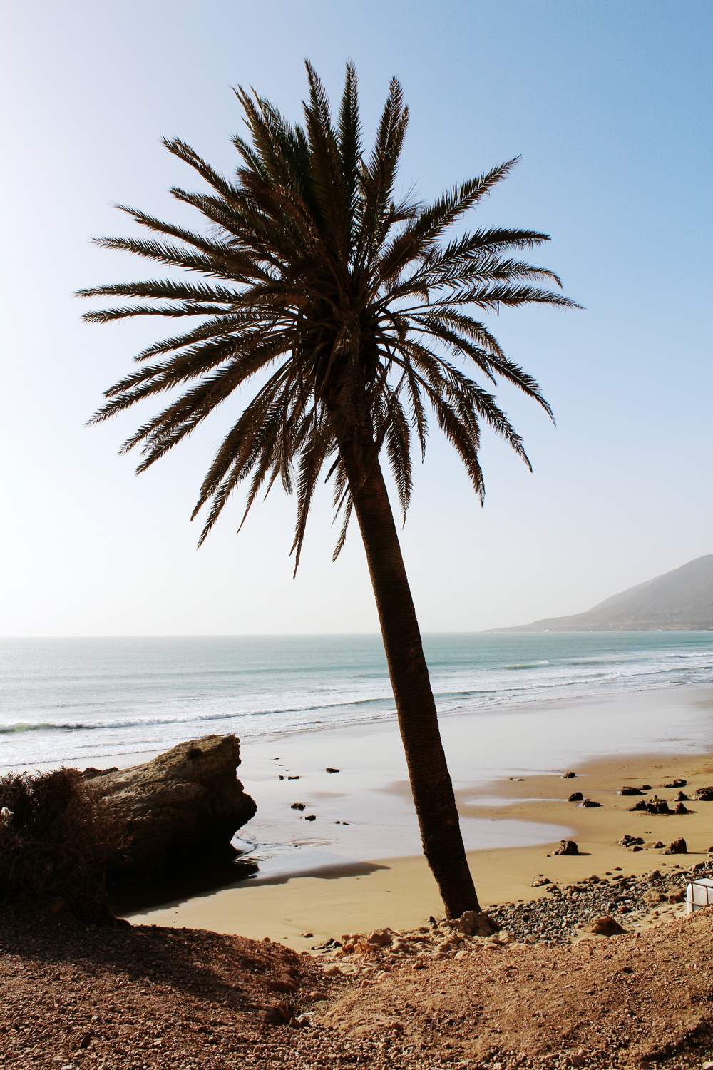 palm tree surfing taghazout morocco wave provocateur