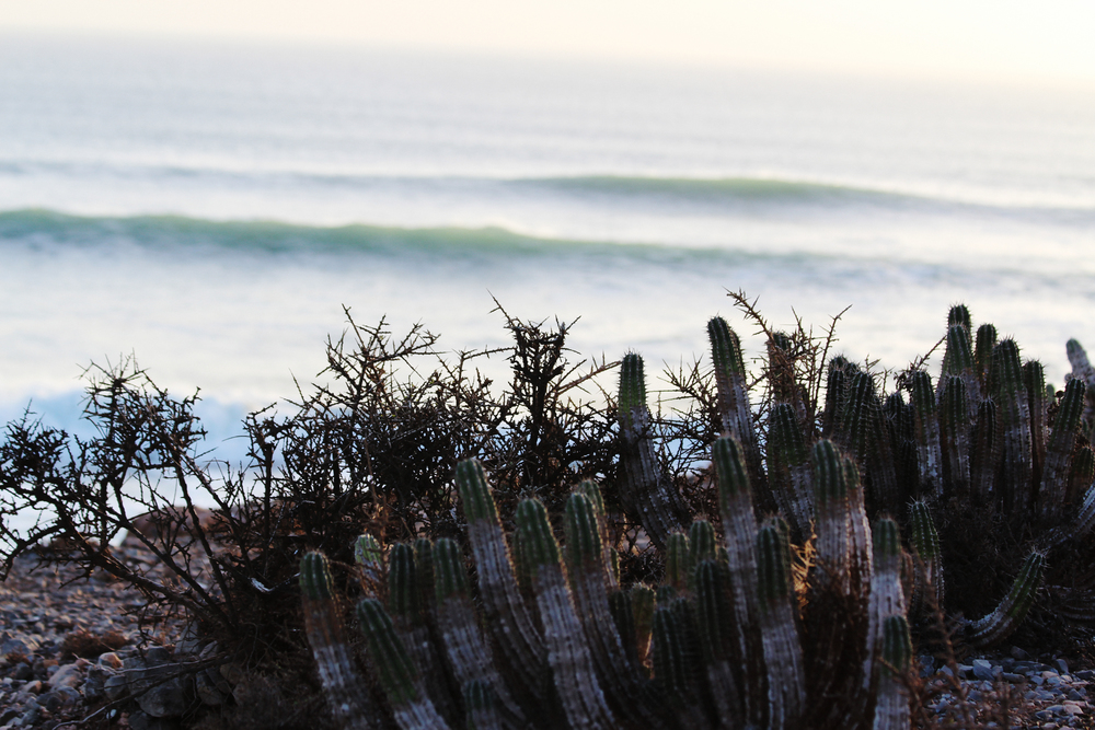 taghazout surfing morocco wave provocateur